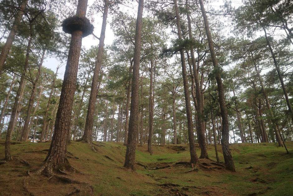 Camp-John-Hay-Baguio