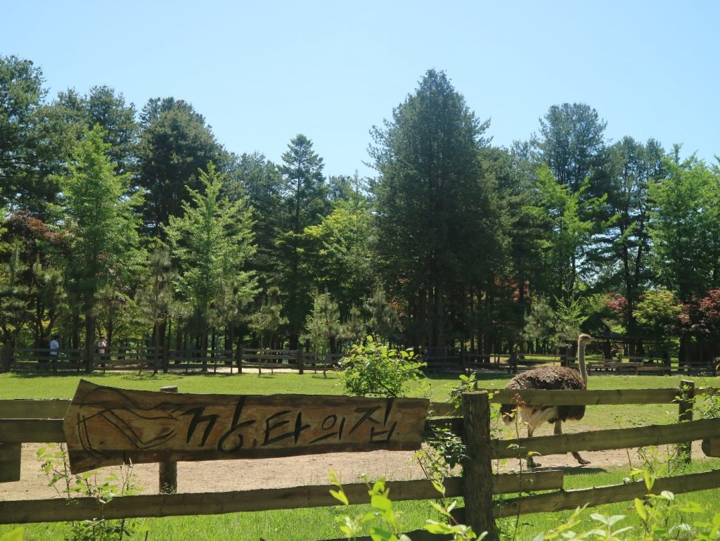 Nami Island Ostrich Park